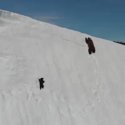 雪山でのクマの親子  https://t.co/UMppyT2GMs